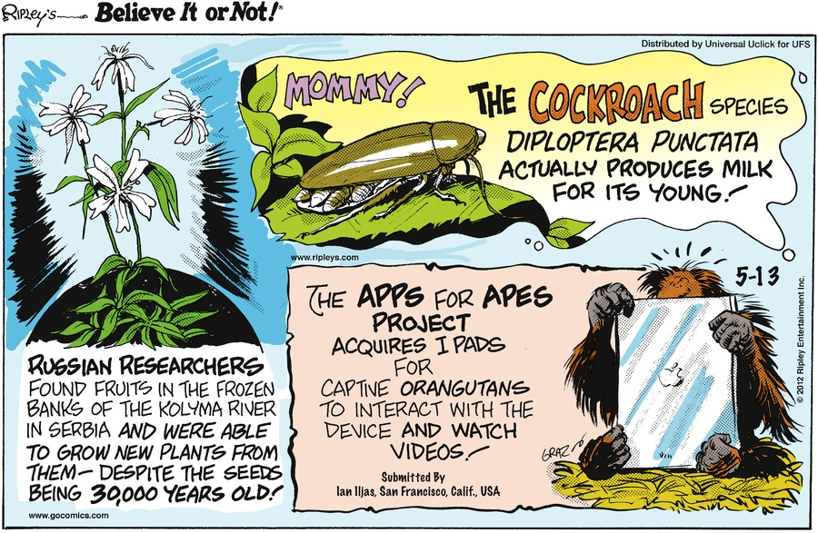 Ripley's Believe It or Not Comic Strip for May 13, 2012