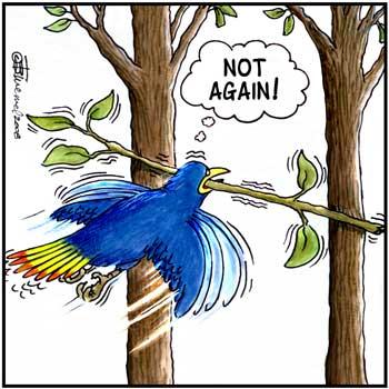 Birdbrains Comic Strip for April 08, 2021
