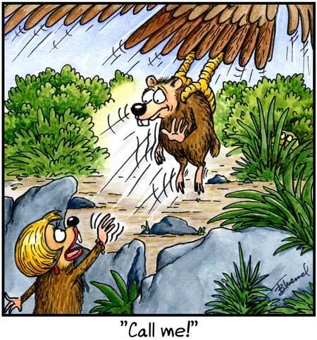 Birdbrains for Feb 2, 2013 Comic Strip