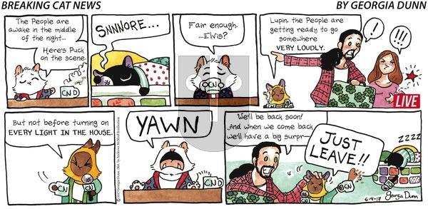 Breaking Cat News on Sunday June 4, 2017 Comic Strip