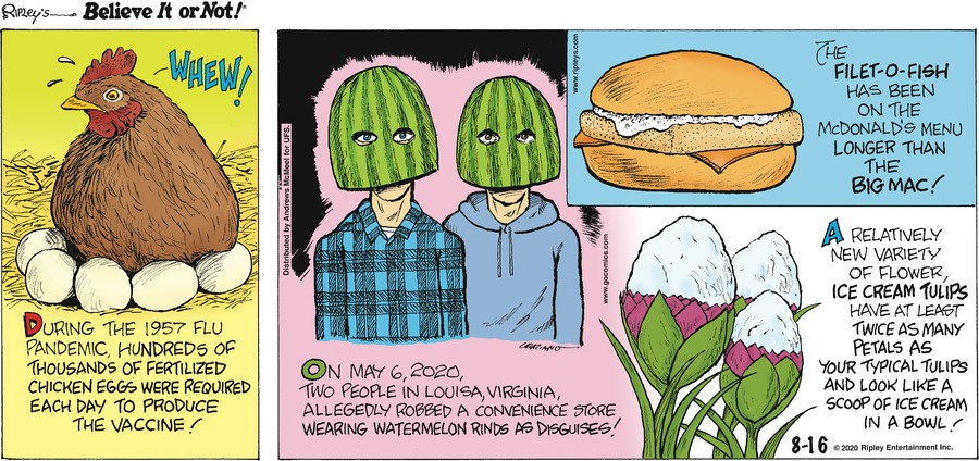 Ripley's Believe It or Not Comic Strip for August 16, 2020