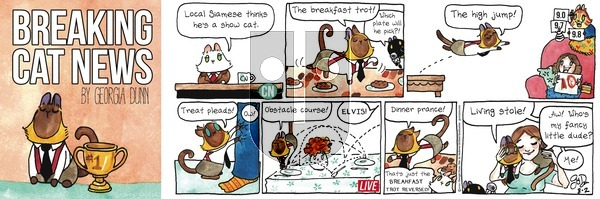 Breaking Cat News on Sunday August 2, 2020 Comic Strip