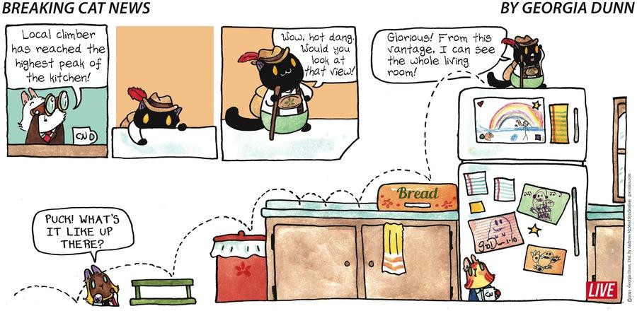 Breaking Cat News Comic Strip for January 10, 2021