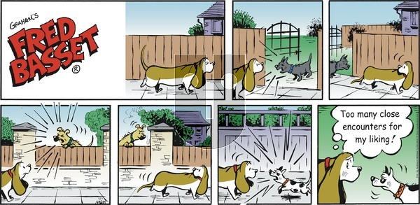Fred Basset - Sunday December 1, 2019 Comic Strip