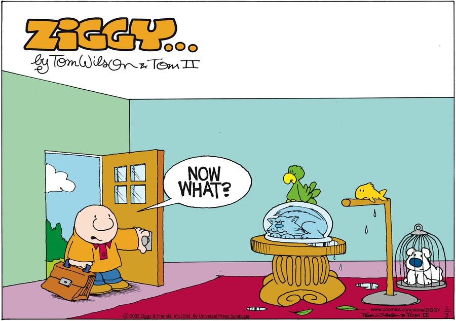 Ziggy: Now what?