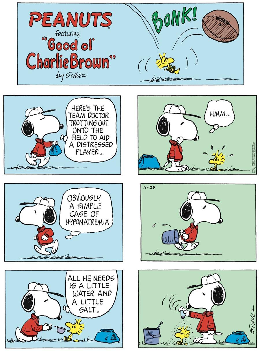 Peanuts Comic Strip for November 29, 2020