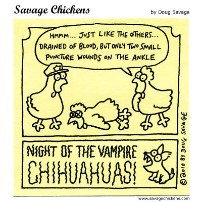 Night of the Vampire Chihuahuas! 