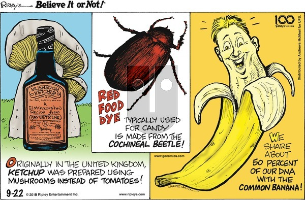 Ripley's Believe It or Not on Sunday September 22, 2019 Comic Strip