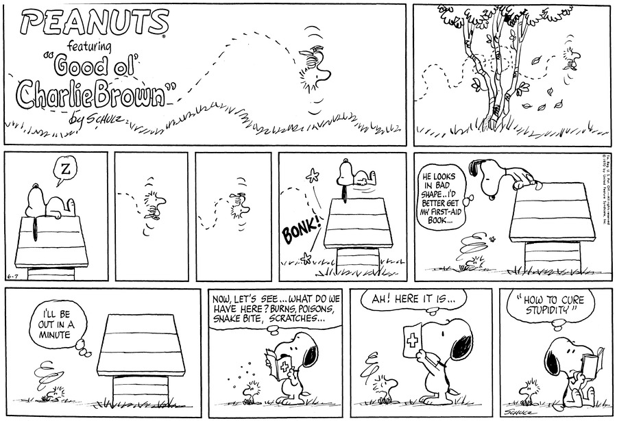 "A bird flies around through a tree.<BR><BR> Snoopy lies on his back on the doghouse. ""Z"" He is asleep.<BR><BR> The bird flies.<BR><BR> The bird flies upside down.<BR><BR> BONK! The bird crashes into the doghouse. Snoopy is lifted straight up in the air.<BR><BR> Snoopy sits on the edge of the doghouse and leans over. He thinks,  ""He looks in bad shape..I'd better get my first-aid book..."" The bird sits slumped in the grass.<BR><BR> From inside the doghouse Snoopy thinks, ""I'll be out in a minute."" the bird remains on the ground.<BR><BR> ""Now, let's see... What do we have here? Burns, poison, snake bites, scratches..."" Snoopy stands next to Woodstock, reading his book. The bird sits up.<BR><BR> ""Ah! Here it is..."" The bird looks up at Snoopy, who stands facing him, still looking at the book.<BR><BR> Snoopy sits on the ground and reads: ""How to cure stupidity.""<BR><BR>"