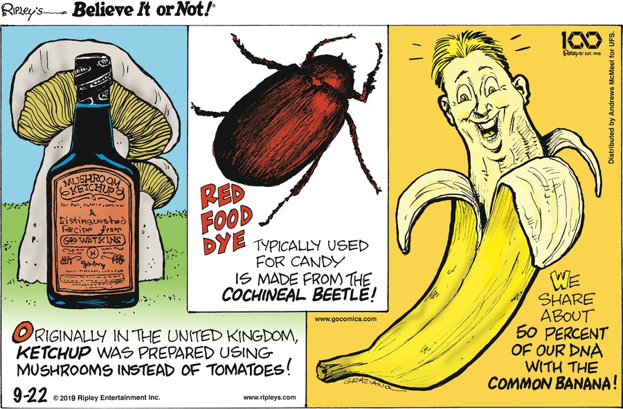 Ripley's Believe It or Not Comic Strip for September 22, 2019