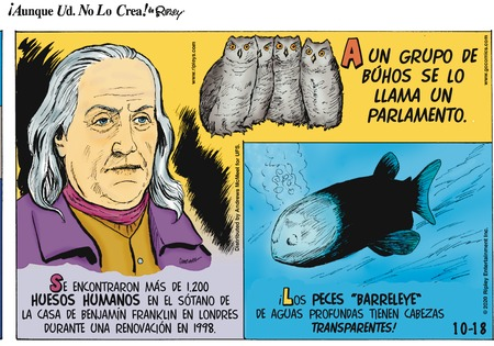 Ripley's ¡Aunque Usted no lo Crea! Comic Strip for October 18, 2020