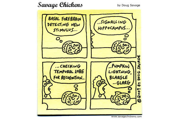 Brain: Basal forebrain detecting new stimulus... signalling hippocampus... checking temporal lobe for recognition... pumpkin lightning, blargle...glarg