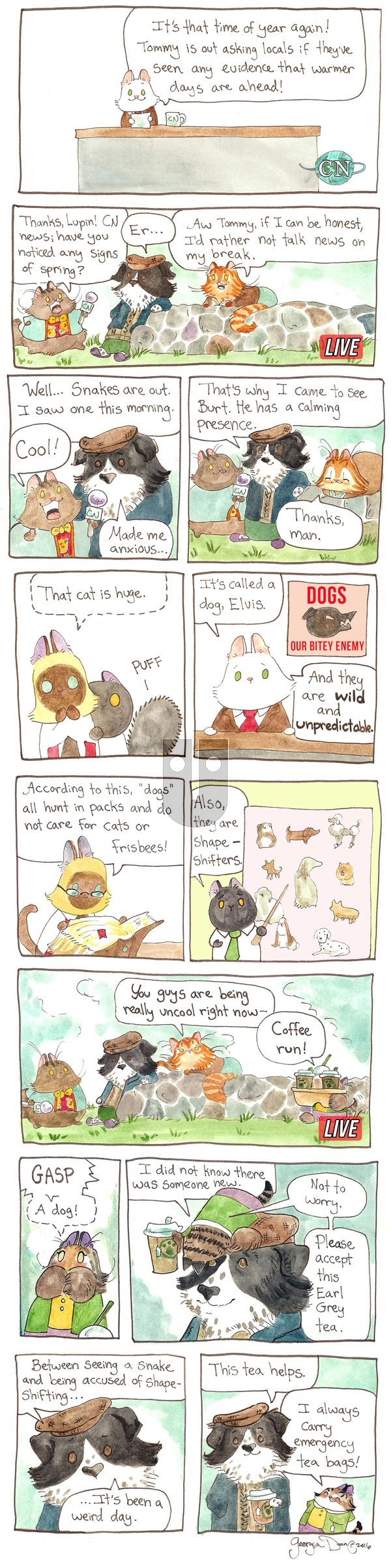 Breaking Cat News on Sunday May 15, 2016 Comic Strip