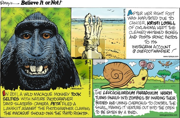 Ripley's Believe It or Not on Sunday March 1, 2020 Comic Strip