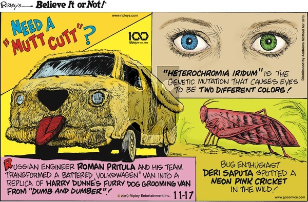 Ripley's Believe It or Not - Sunday November 17, 2019 Comic Strip