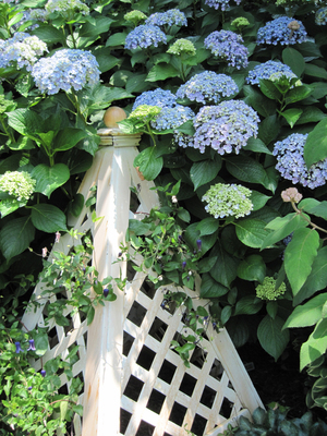 Obelisks need not be tall to make their point. A painted obelisk with lattice-panel sides strikes the right note amid billowing hydrangeas in a summer garden. A clematis grows in the latticework.