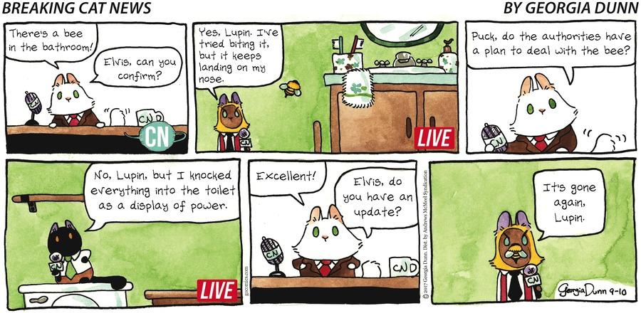 Breaking Cat News for Sep 10, 2017 Comic Strip