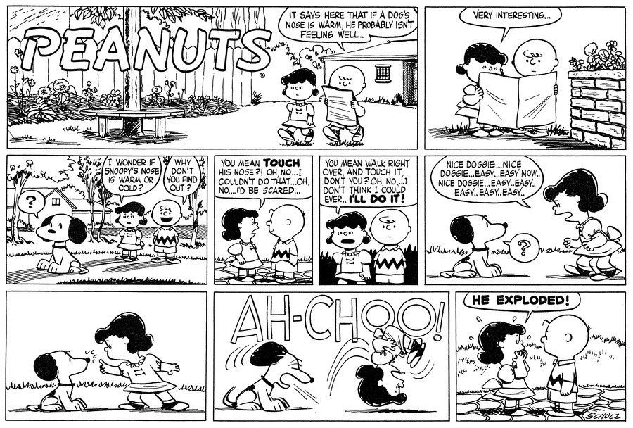 """""""It says here that if a dog's nose is warm, he probably isn't feeling well.."""" Charlie Brown says to Lucy as they walk down the street. He reads a newspaper.<BR><BR> """"Very interesting..."""" Lucy comments. They both look at the newspaper.<BR><BR> """"I wonder if Snoopy's nose is warm or cold?"""" Lucy asks as they spot Snoopy ahead of them. """"Why don't you find out?"""" Charlie Brown asks. Snoopy thinks, """"?""""<BR><BR> They face each other. """"You mean TOUCH his nose?! Oh, no...I couldn't do that...Oh, no...I'd be scared...""""<BR><BR> They look in front of them as Lucy continues, """"You mean walk right over and touch it, don't you? Oh no...I don't think I could ever..I'LL DO IT!""""<BR><BR> Snoopy looks up at Lucy and thinks, """"?"""" as she crouches over him and coos, """"Nice doggie...Easy...Easy now...Nice doggie...Easy..easy..easy.. easy..easy..""""<BR><BR> Lucy tentatively reaches out a finger to touch Snoopy's nose.<BR><BR> """"AH-CHOO!"""" Snoopy sneezes, sending Lucy somersalting through the air.<BR><BR> Lucy faces Charlie Brown with her hands over her mouth: """"HE EXPLODED!"""" she exclaims.<BR><BR>"""