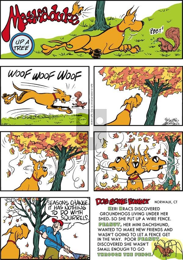 Marmaduke on Sunday November 20, 2016 Comic Strip