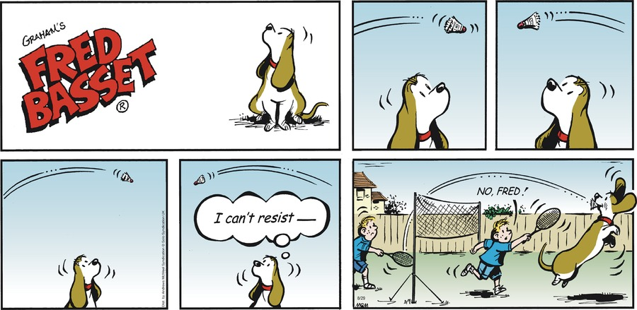 Fred Basset Comic Strip for August 29, 2021