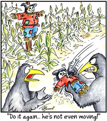 Birdbrains Comic Strip for February 19, 2020