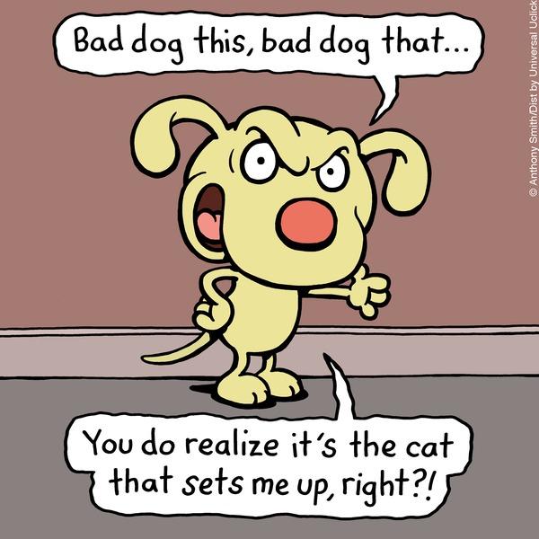 Cattitude — Doggonit