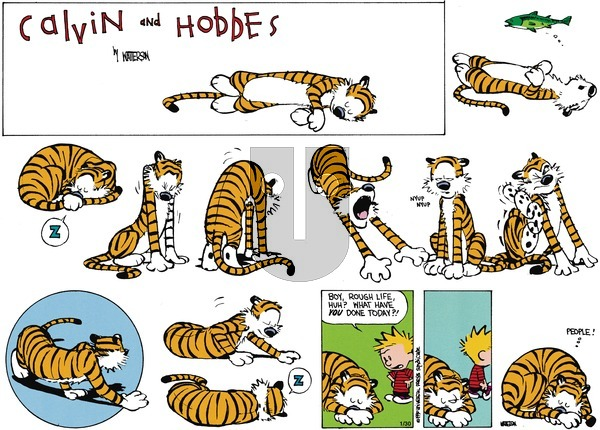 Calvin and Hobbes - Sunday May 22, 1994 Comic Strip