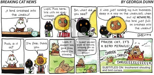 Breaking Cat News on Sunday July 8, 2018 Comic Strip