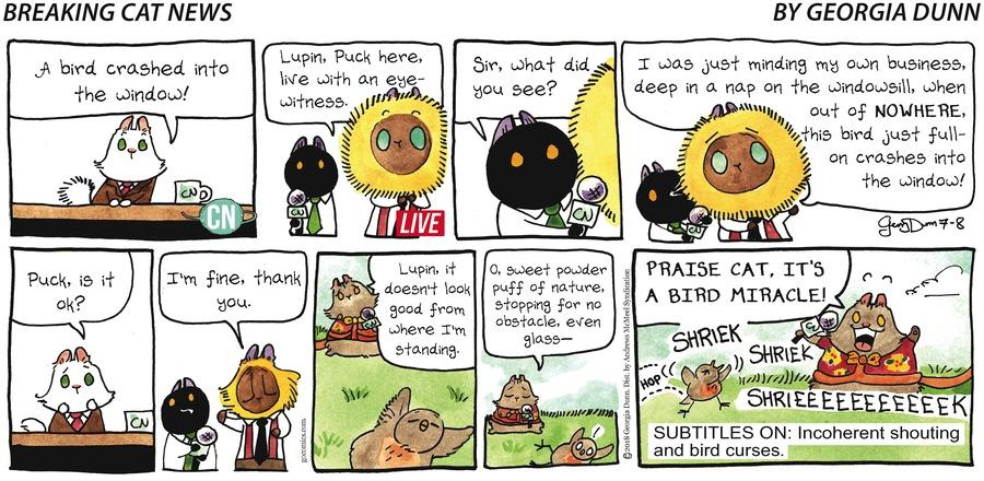 Breaking Cat News for Jul 8, 2018 Comic Strip
