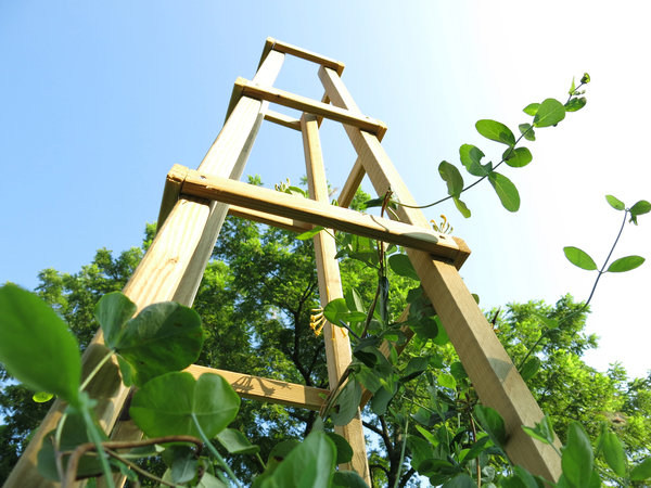 Trellis-work obelisks were popular in 17th- and 18th-century Dutch gardens, and they're handsome and hardworking in modern gardens, too. They're easy to make with materials from a building-supply store; use them to support annual and perennial vines, or a crop of beans or cucumbers.