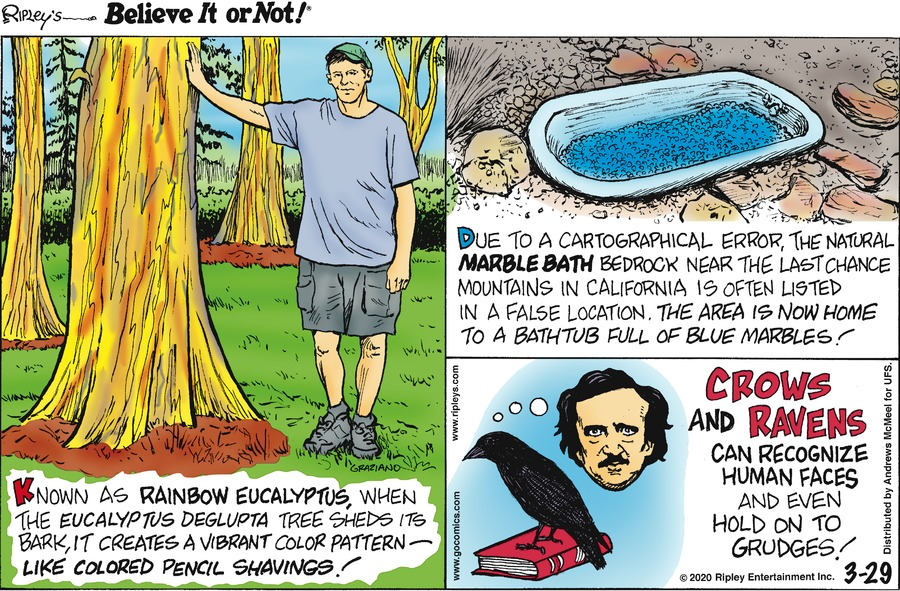 Ripley's Believe It or Not Comic Strip for March 29, 2020