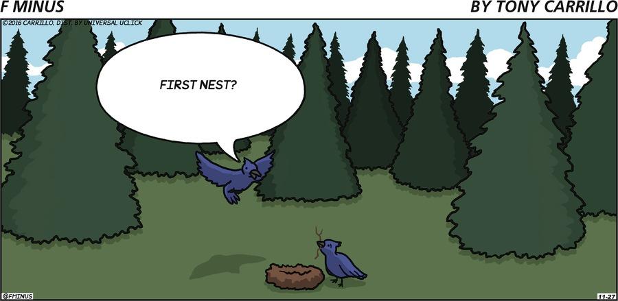 Bird in air: First nest?