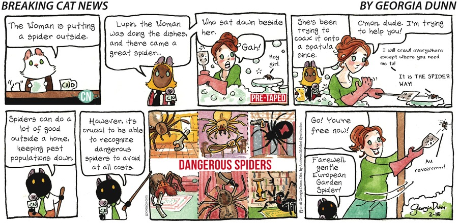 Breaking Cat News for Feb 18, 2018 Comic Strip