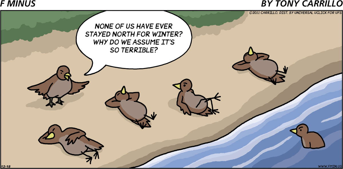 Bird standing up: None of us have ever stayed north for winter? Why do we assume it's so terrible?