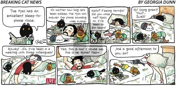 Breaking Cat News on Sunday July 29, 2018 Comic Strip