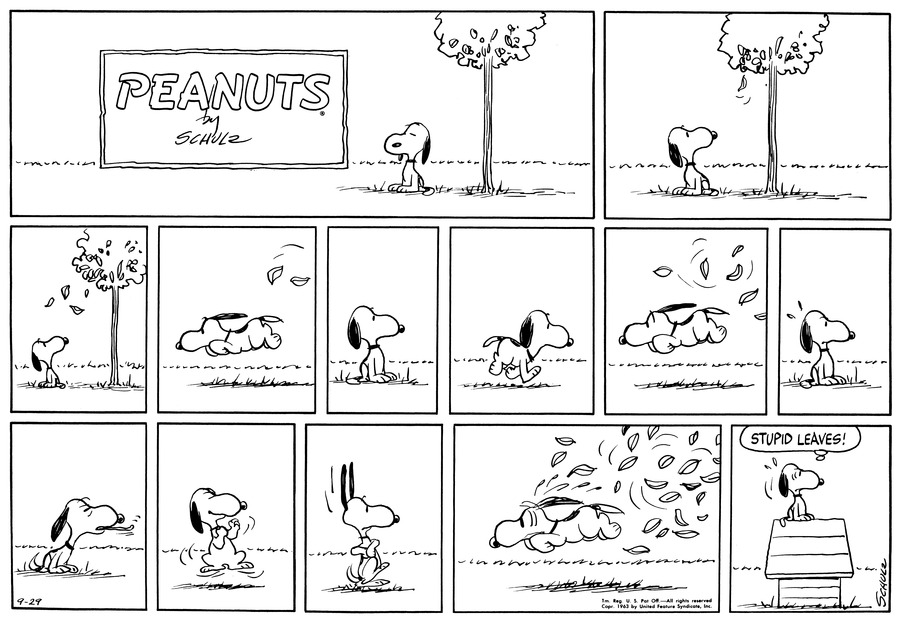 "Snoopy sits on the ground next to a tree. He watches as a leaf starts to fall.<BR><BR> He watches several leaves float towards the ground.<BR><BR> He races away from the leaves.<BR><BR> He sits and looks off to one side.<BR><BR> Snoopy trots back.<BR><BR> He races off again as a number of leaves float toward him.<BR><BR> He sits and looks off to one side again.<BR><BR> He sticks his tongue out.<BR><BR> Snoopy clenches his fist and jumps, as though to spar.<BR><BR> His ears fly up and his eyes goggle. [PANEL 11]: Snoopy races away as a horde of leaves appears to chase him. [PANEL 12]: ""Stupid leaves!"" Snoopy sits on top of the doghouse, looking off to one side.<BR><BR>"