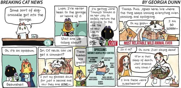 Breaking Cat News - Sunday March 15, 2020 Comic Strip