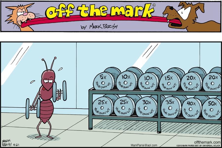 An ant lifts weights at the gym.