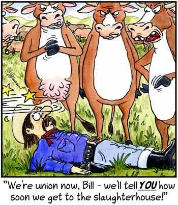 Birdbrains Comic Strip for September 20, 2009
