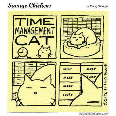 Time Management Cat