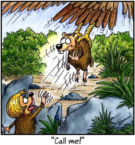 Birdbrains for May 12, 2013 Comic Strip