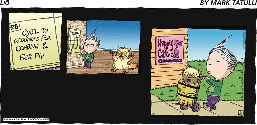 Lio by Mark Tatulli 28 Cybil To Groomers For Combing & Flea Dip Happy Cat Groomers
