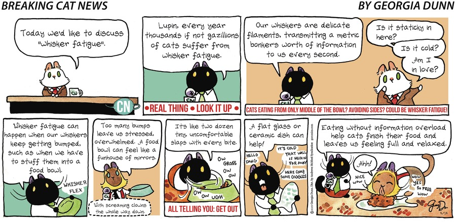 Breaking Cat News Comic Strip for August 18, 2019