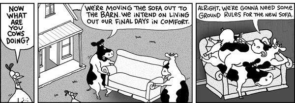 Chicken: Now what are you cows doing?  Cow 1: We're moving the sofa out to the barn. We intend on living out our final days in comfort.  Cow 2: Alright, we're gonna need some ground rules for the new sofa.