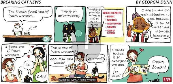 Breaking Cat News on Sunday August 12, 2018 Comic Strip