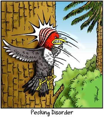 Birdbrains by Thom Bluemel on Sun, 03 Oct 2021