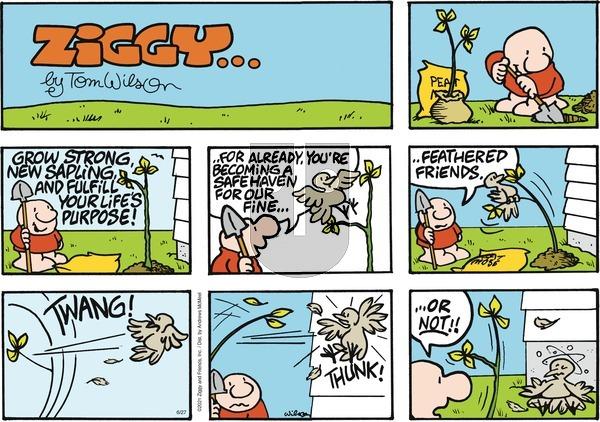 Ziggy on Sunday June 27, 2021 Comic Strip