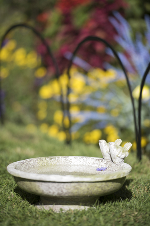 Many birds will come to a birdbath on the ground. Make sure low birdbaths are in a spot where the birds can watch out for predators.