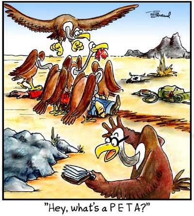 Birdbrains