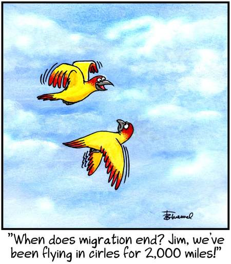 Birdbrains Comic Strip for July 06, 2013